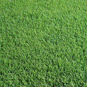 grama-esmeralda